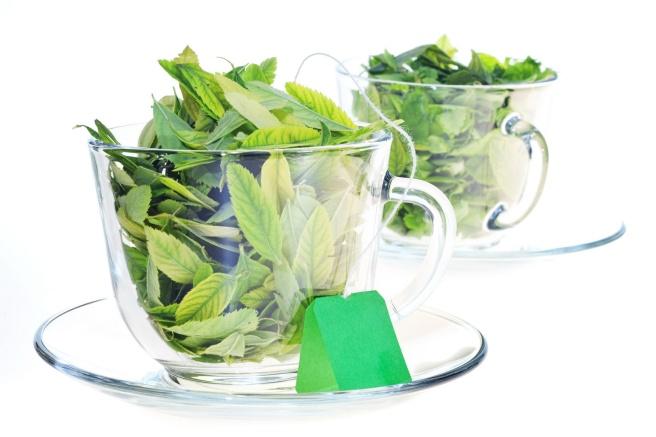 Freshness of green leaves, on white