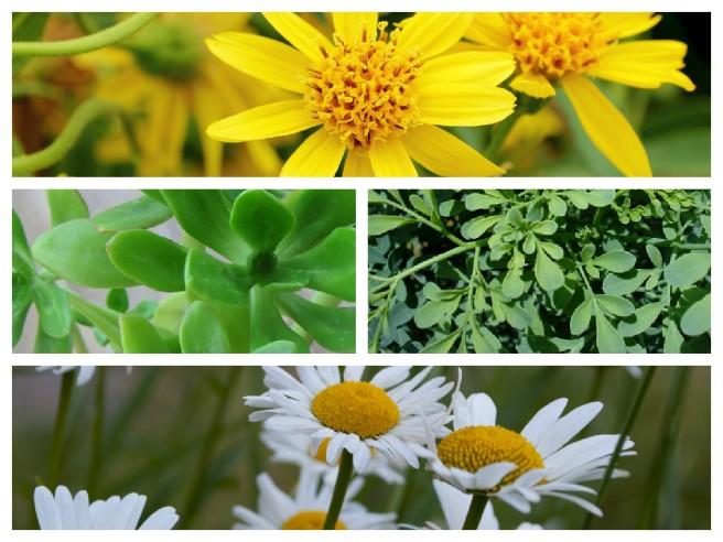 postagem_plantas_medicinais_ramon_de_assis_homeopata_divinopolis