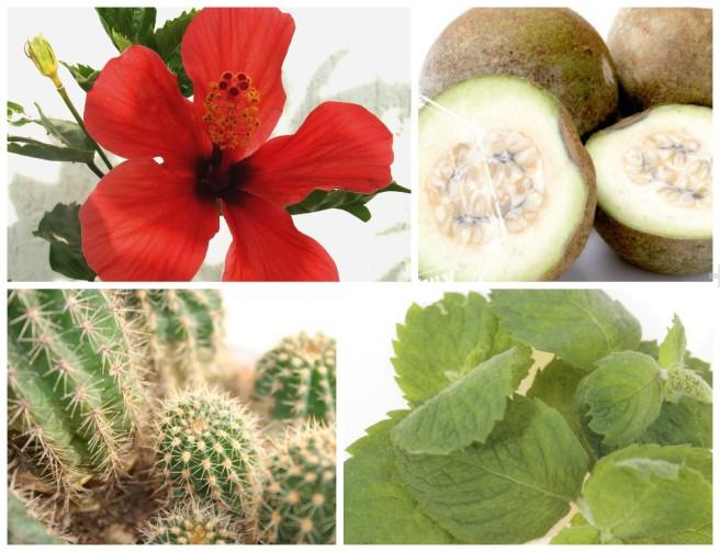 postagem_hortela_plantas_medicinais_ramondeassis